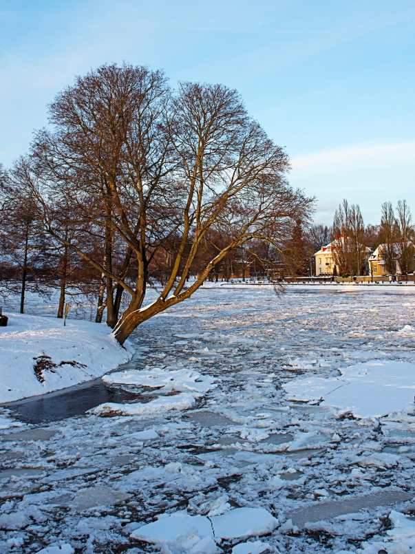 Träd över is Justerad